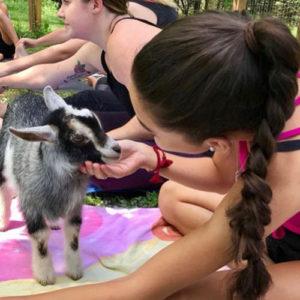 Goat-yoga-petting-goat
