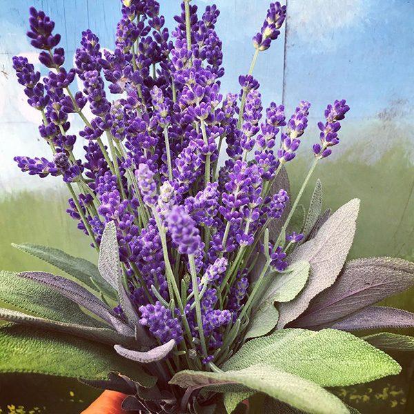 Mad-Lavender-farm-lavender-bouquet